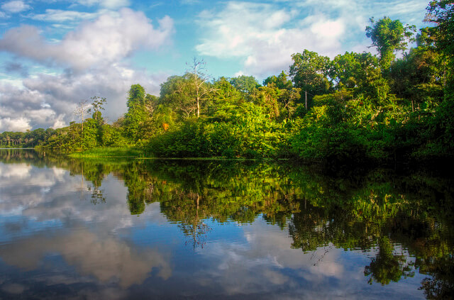 Recent Trends in Climate Change Litigation: Colombia's Amazon and Juliana v U.S