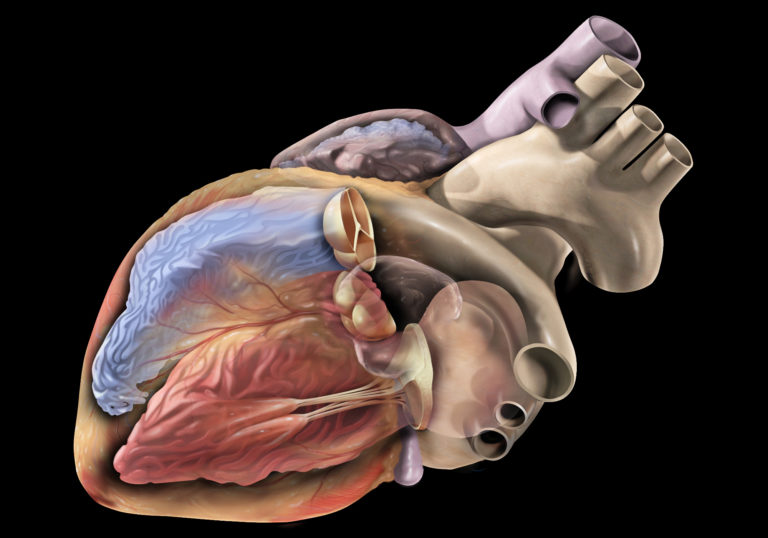 Organ Donation: New Law, New Horizons