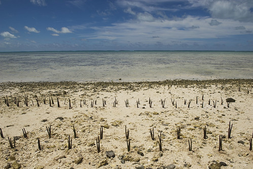 Climate Fund Case: Climate Litigation reaches the Brazilian Supreme Court