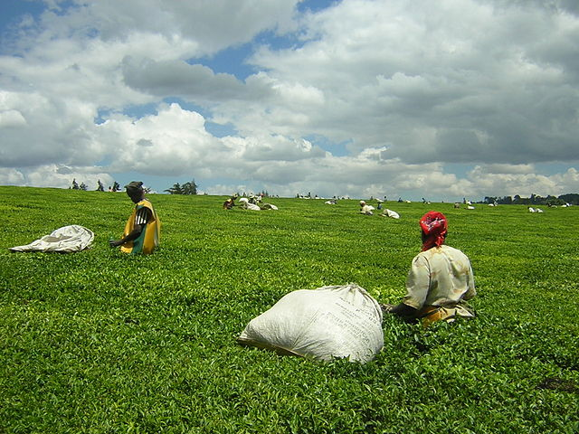 The Kenyan Tea Workers' Case: Evaluating the Impediments to Holding MNCs Accountable for the Actions of their Subsidiaries